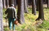 Будьте осторожнее в лесах!
