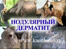 Ветеринарная служба информирует