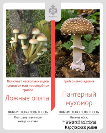 🌲За окном грибной сезон!
