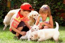 «Правила поведения при общении с животными»